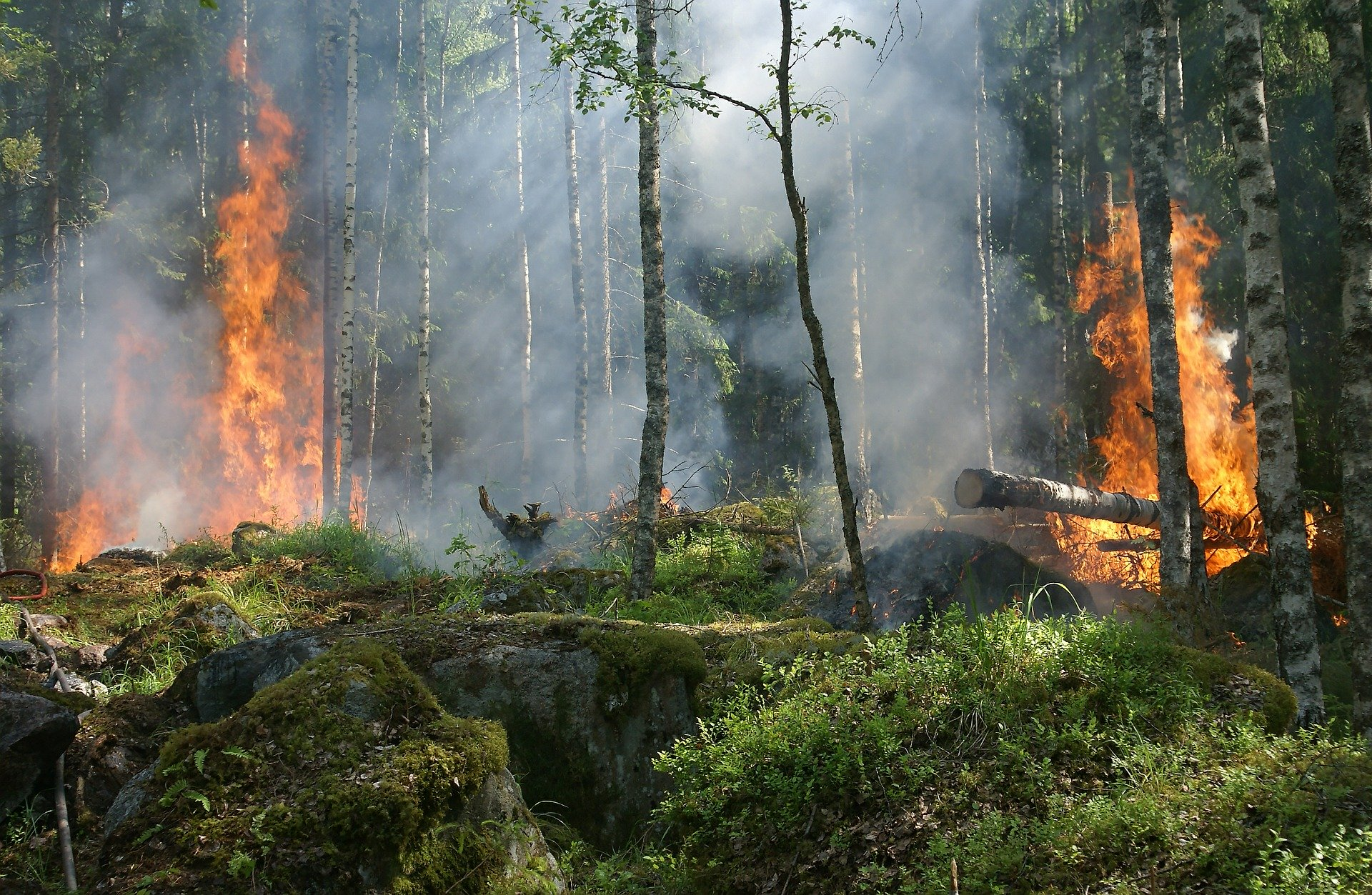 Ilustracja do informacji: III (najwyższy) stopnień zagrożenia pożarowego terenów leśnych woj. lubuskiego !!!