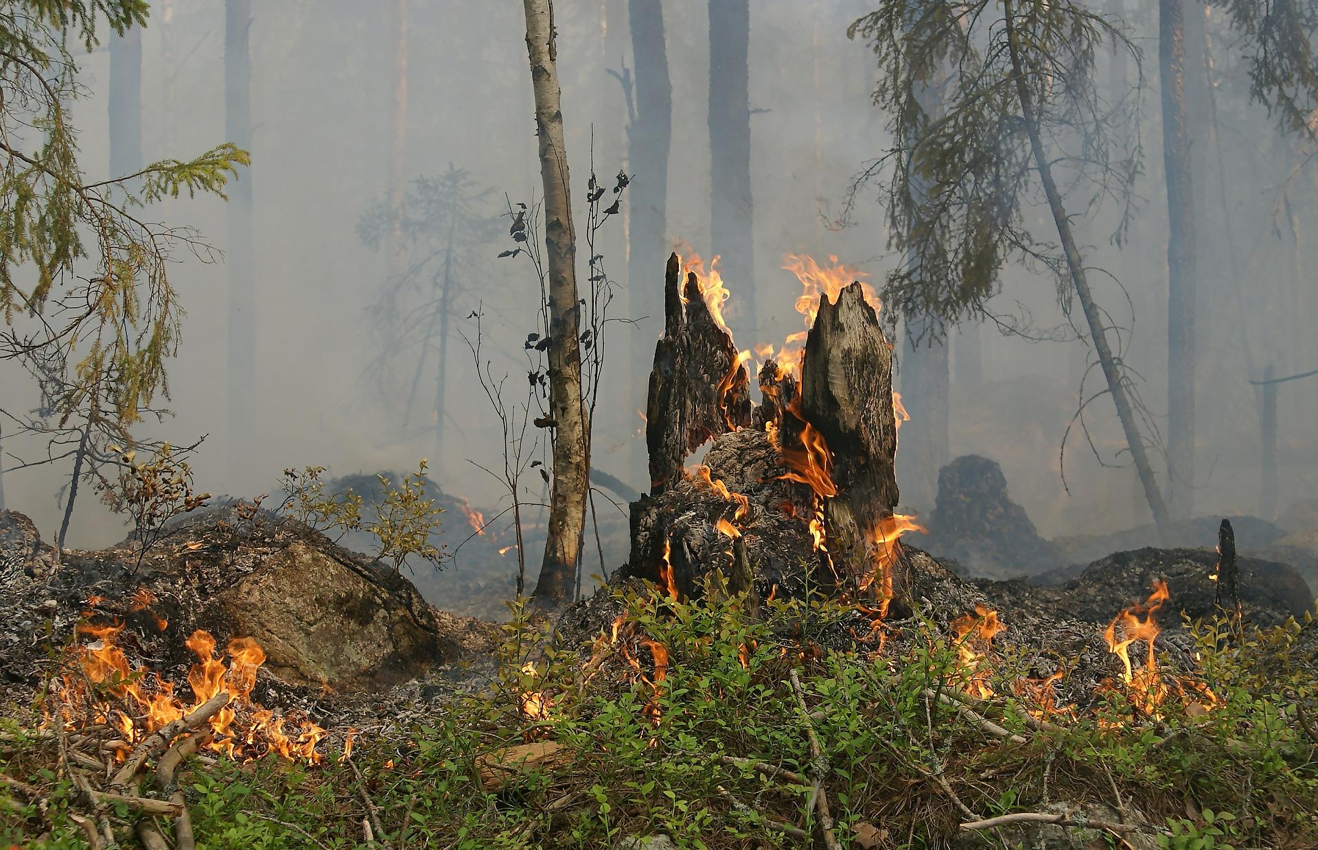 Ilustracja do informacji: Uwaga! Zagrożenie pożarowe w lasach!