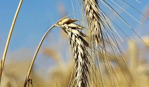 Ilustracja do informacji: Informacja dla rolników